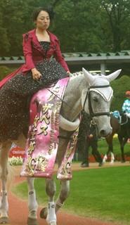 エリザベス女王杯の誘導馬3.JPG