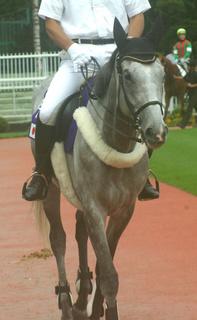 9月4日の誘導馬1.JPG