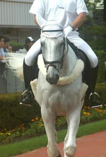 9月4日の誘導馬2.JPG