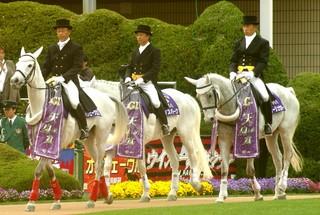 天皇賞誘導馬2.JPG