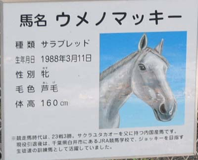 20080430negishi (4).jpg